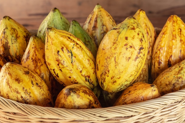 Fresh cocoa fruit in a basket