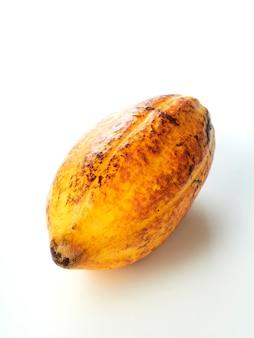 Fresh cocoa fruit pod white background