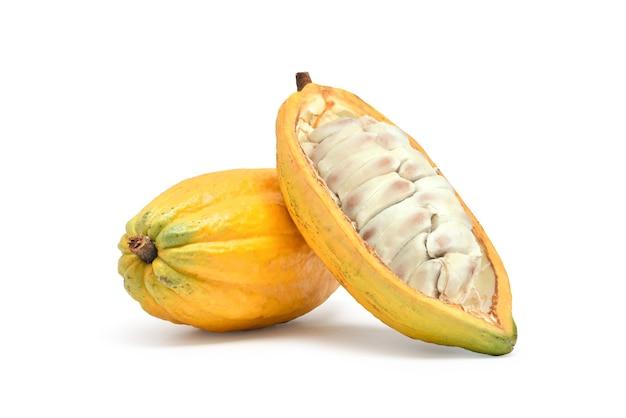 Fresh cocoa fruits isolated on white