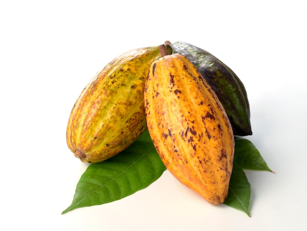 Fresh cocoa fruits with green leaf
