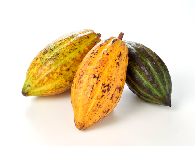 Fresh cocoa fruits