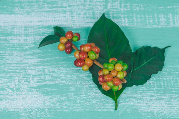 Fresh coffee beans  on color wood  background