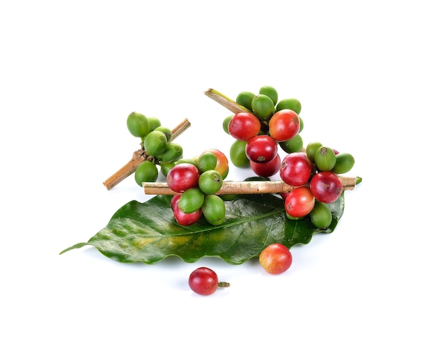 Fresh coffee beans isolated on white