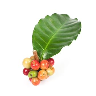 Fresh coffee beans on white background, concept food and drink.