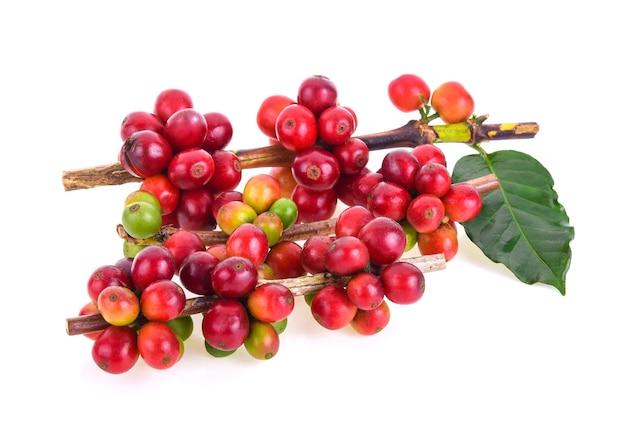 Fresh coffee beans on white background