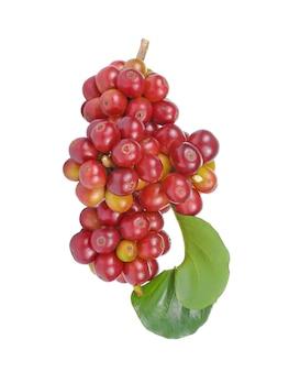 흰색 배경에 고립 된 잎과 신선한 커피 콩