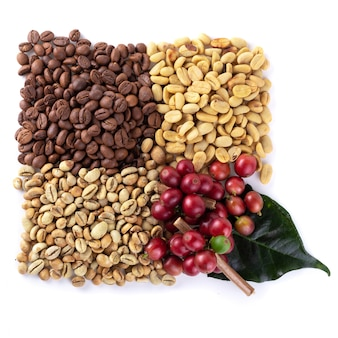 Fresh coffee red berry branch, coffee beans and roasted coffee beans