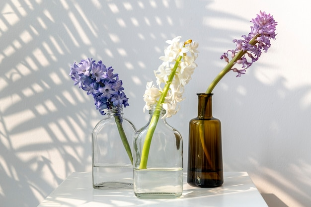 Fresh colorful hyacinth flowers in glass bottle for decoration