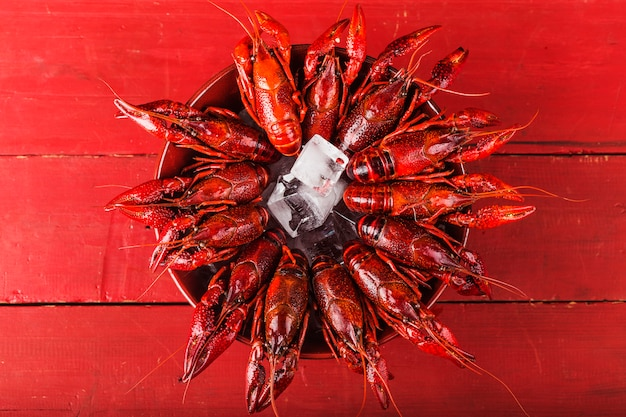 Fresh cooked crayfish in ice cubes