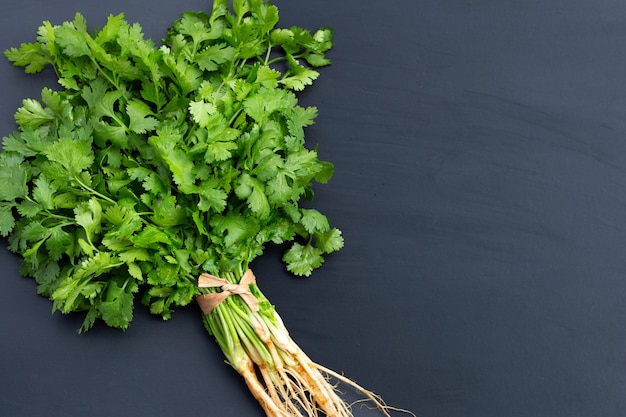 Fresh coriander on dark background. copy space