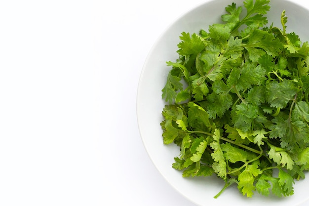 Fresh coriander leaves in white plate on white background.