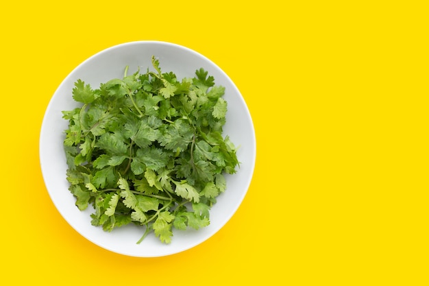 Fresh coriander leaves in white plate on yellow background.