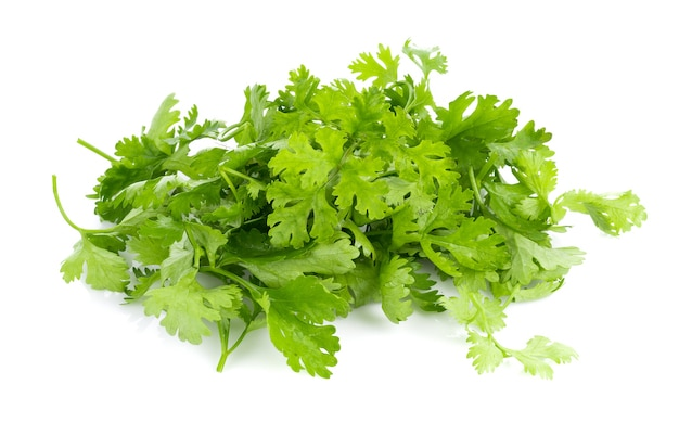 Fresh coriander leaves on white surface