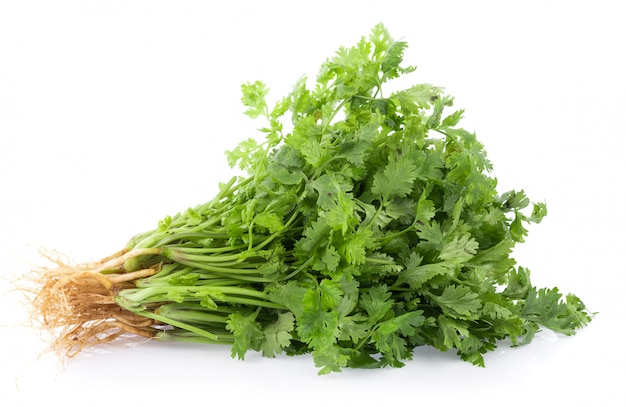 Fresh coriander leaves on white wall