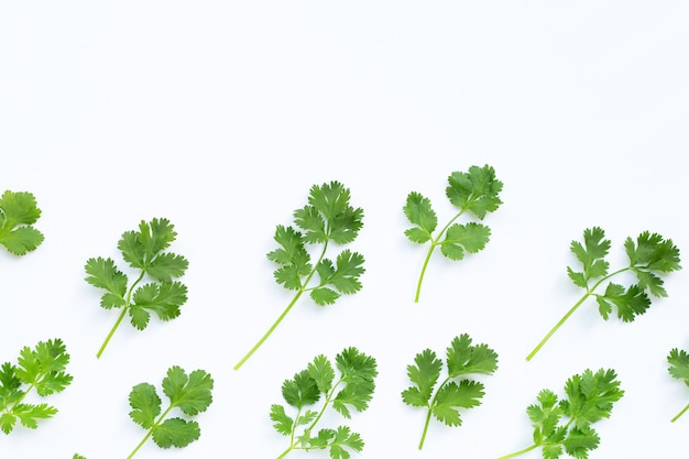 Fresh coriander leaves.