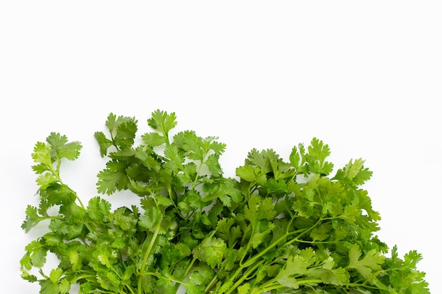 Fresh coriander on white background.