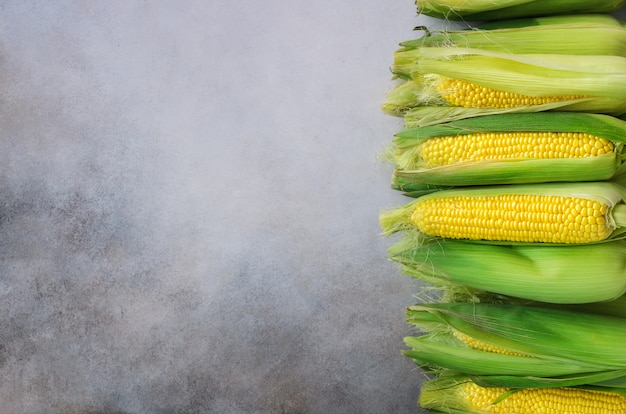 Fresh corn on cobs on light grey concrete
