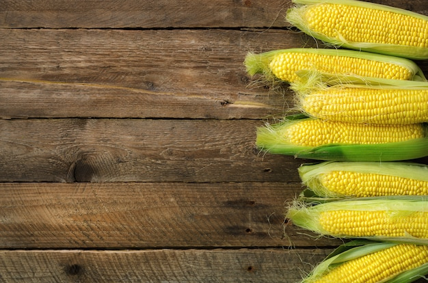 Fresh corn on cobs on vintage rustic wooden