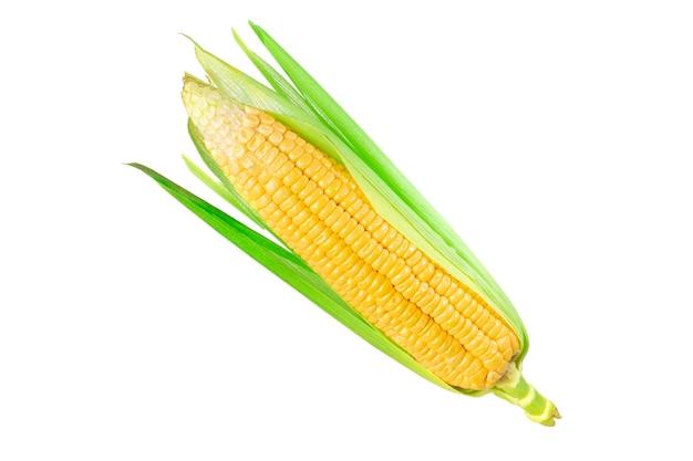 白い背景の上の新鮮なトウモロコシ