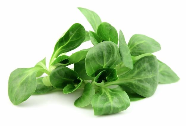 Листья салата из свежей кукурузы на белом