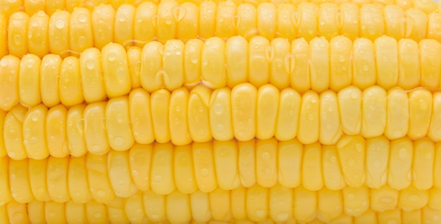 Fresh corn with water drops.