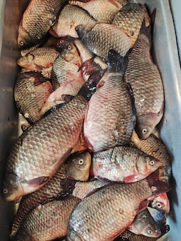 魚市場で販売されている新鮮なフナ