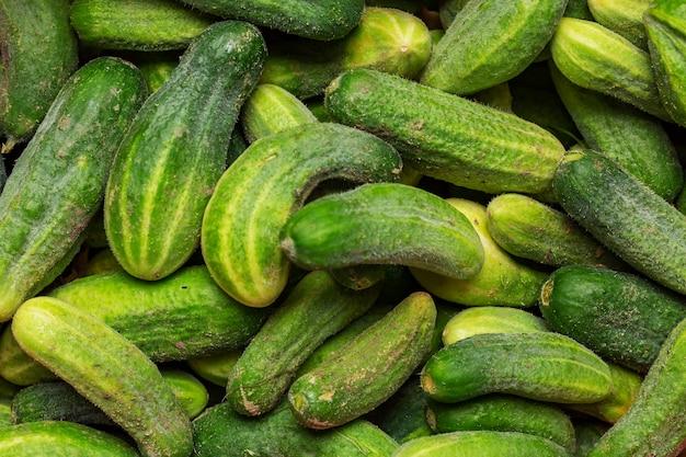 Fresh cucumber  top view