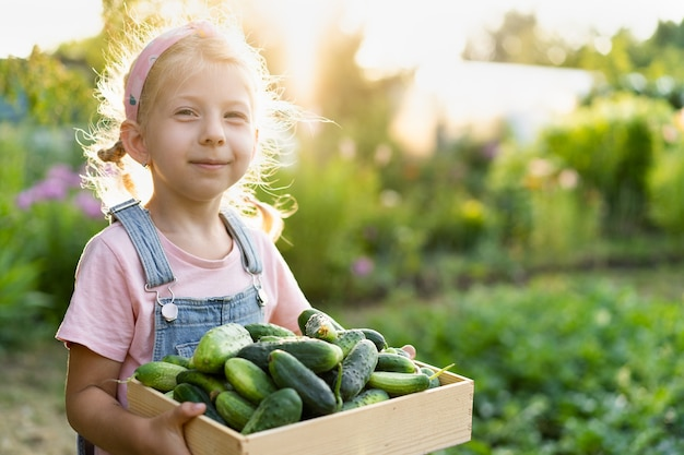 Fresh cucumbers from the garden in the hands of a cute blonde girl, organic products, vegetable harvest.