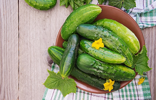 Fresh cucumbers from the garden on the table in the summer garden. top view