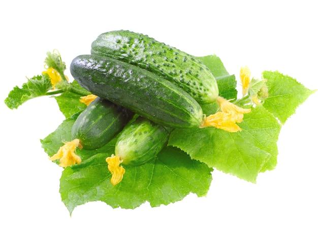 Свежие огурцы с зелеными листьями и желтым цветком. изолированные над белым.