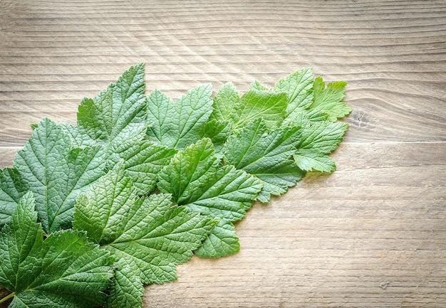 Fresh currant leaves on the wooden board