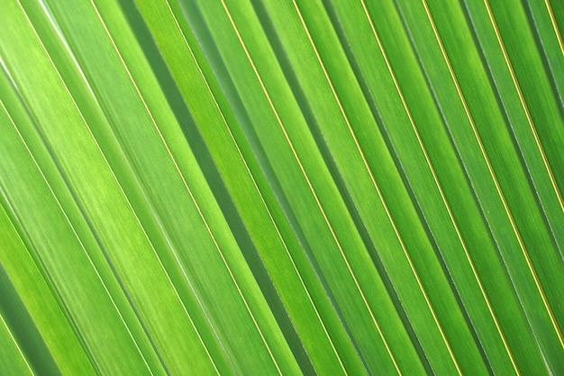 신선한 세부 사항 성장 식물 건강한 배경 근접 촬영 환경 잎 잎