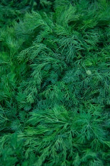 Fresh dill on the market