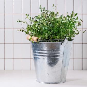 Fresh dill in metal pot