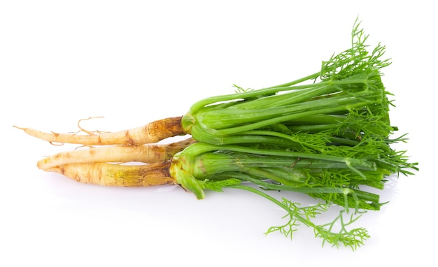 Fresh dill on white background