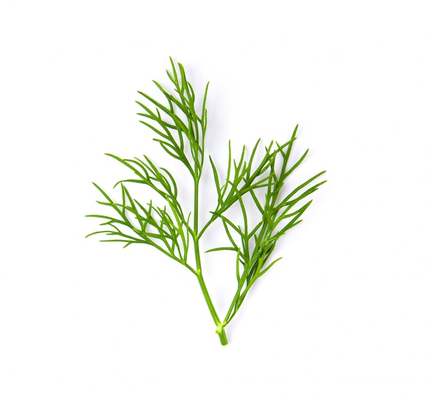 Fresh dill on white wall.