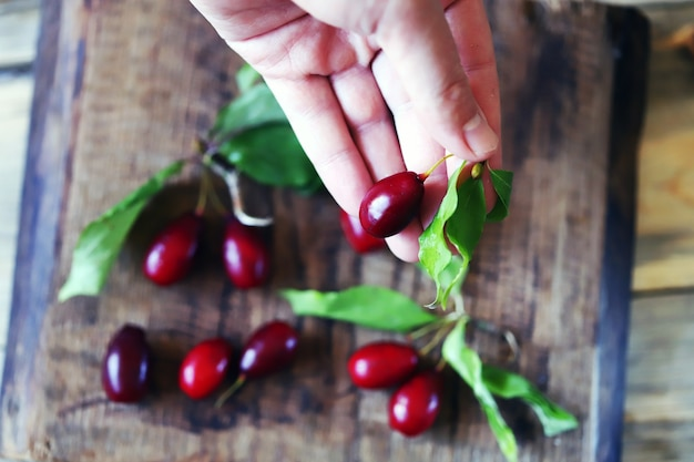 Fresh dogwood berry in hand.