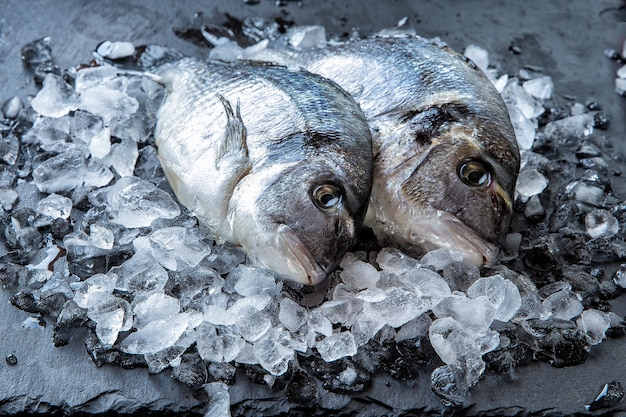 Fresh dorado fish in pieces of ice on a dark background