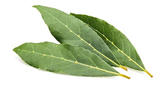 Fresh and dry bay leaves.