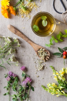 Fresh and dry healing herbs on cloth