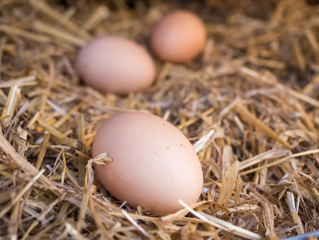 Fresh eco-friendly chicken eggs in straw. soft focus