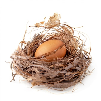 Fresh egg sits in a natural nest isolated