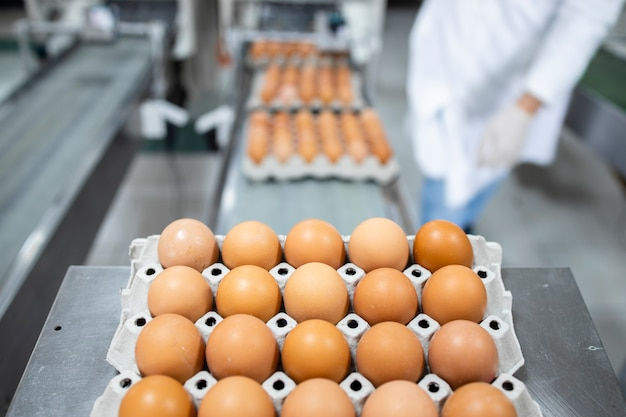 가금류 농장의 운송 라인에 신선한 계란과 계란을 분류하는 작업자.