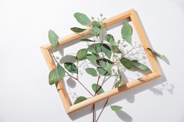 Fresh eucalyptus branch in wooden frame on a white  background with hard shadows. top view and copy space image