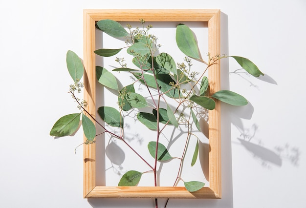 Fresh eucalyptus branch in wooden frame on a white  background with hard shadows. top view image