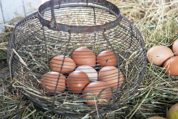 Fresh farm eggs in wire mesh basket on the straw