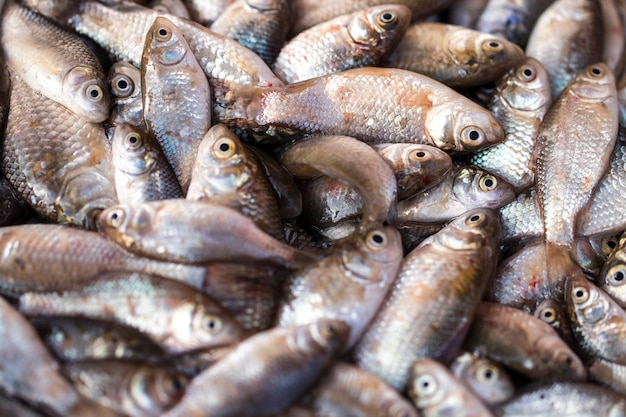 Fresh fish in the fresh market or supermarket cooled fish