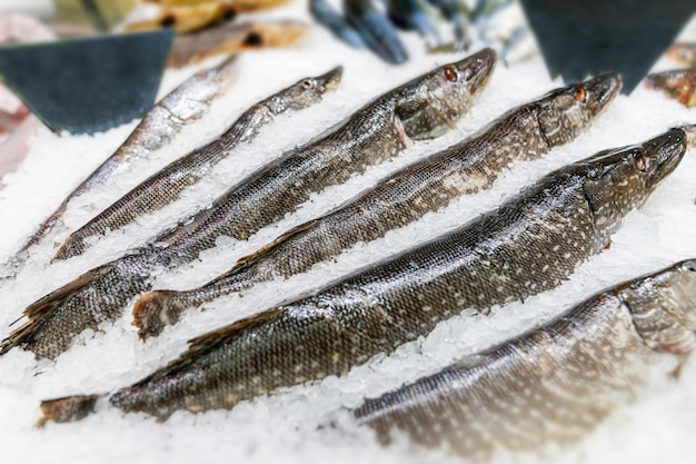 Fresh fish on ice decorated for sale at market, pike