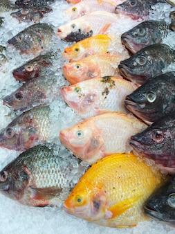 Fresh fish on ice shelf.