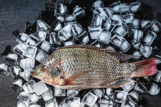 Fresh fish on the ice